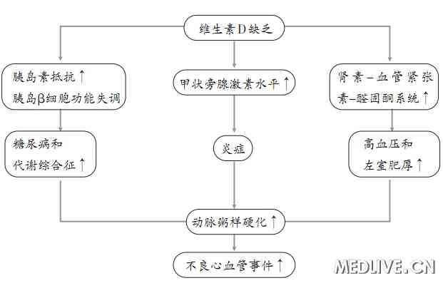 d玫瑰画法步骤