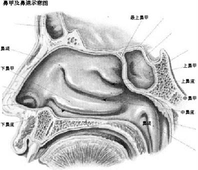 鼻子内部构造图解