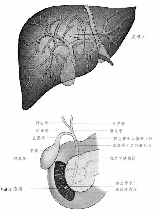 临床干货 胆道肿瘤的临床病理特点和影像学评估