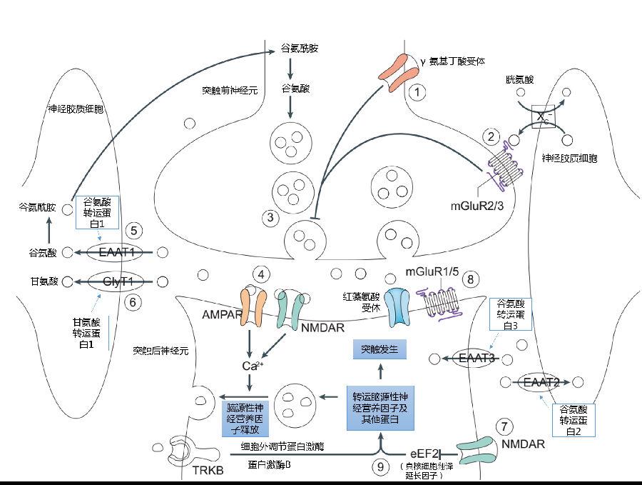 从机制到临床:氯胺酮的未解之谜 - zliming2004 - zliming2004的博客