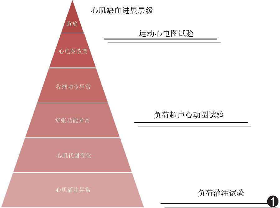 心肌缺血进展层级金字塔模型