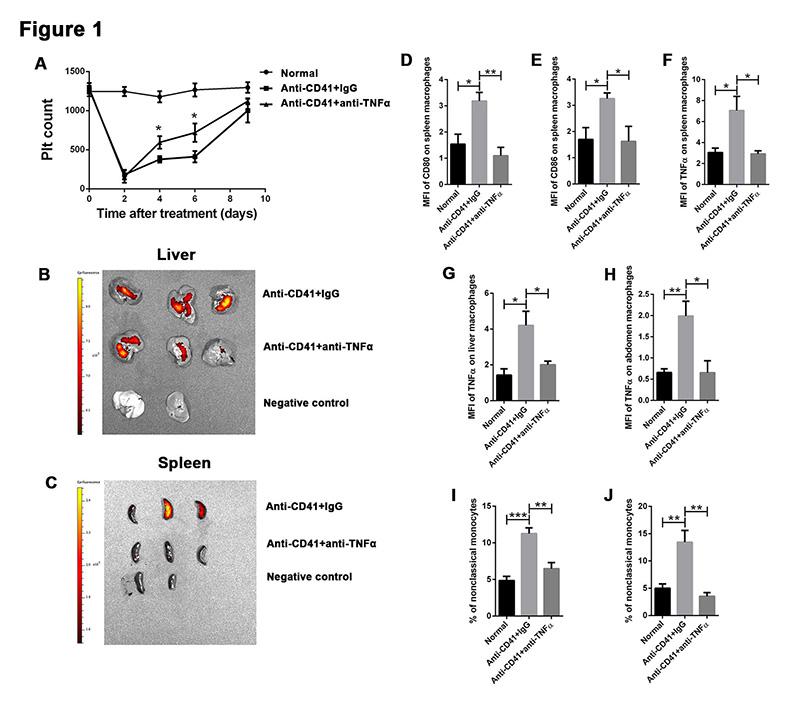原发免疫性血小板减少症的治疗探索:TNF-α阻断
